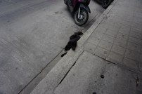 Street dog chillin in the heat