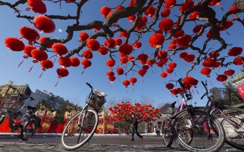Gli alberi decorati con le tradizionali lanterne cinesi