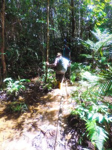 Jungle expedition to the Korowai tribe, Papua, Indonesia