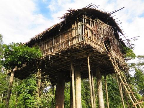 Jungle expedition to the Korowai tribe, Papua, Indonesia
