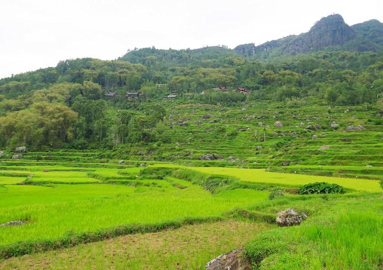 The countryside in Tana Toraja is glorious