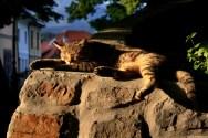 Just a lazy summer afternoon in Kamnik - way to Mali Grad / Leniwe letnie popołudnie w Kamniku - droga na Mały Zamek (Mali Grad)