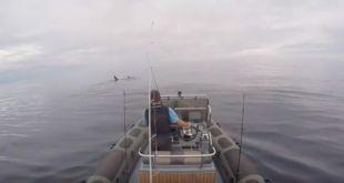Orcas-en-el-Cantabrico