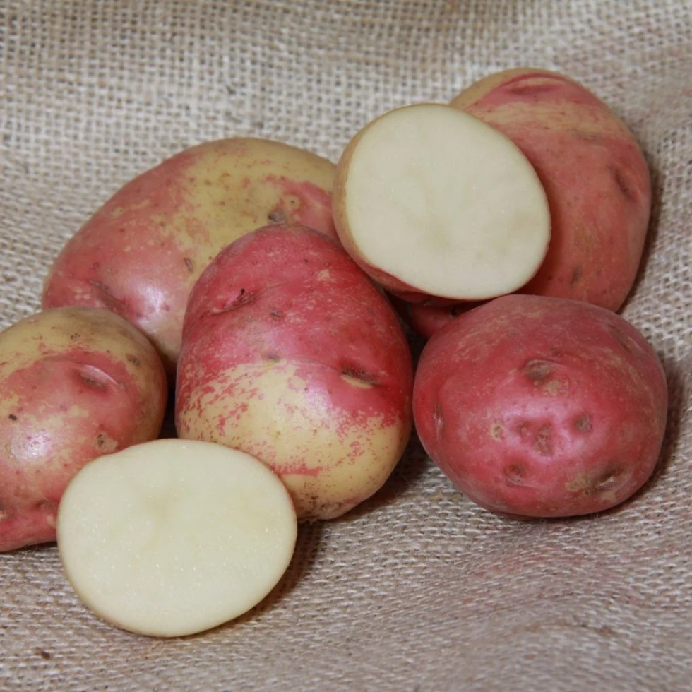 Best Potato To Grow For Beginners
