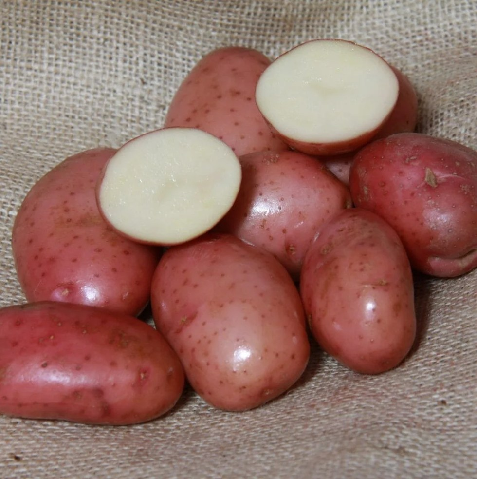 The Best Blight Resistant Potatoes