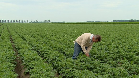 Potatoes in Holland