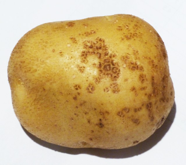 Skin blemish defect of potato tubers caused by climate