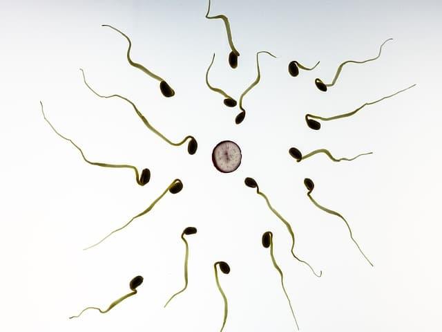 Como Producir Mas Esperma