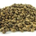 Beneficios nutricionales de las semillas de cáñamo.