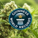 7 Récords mundiales que involucran marihuana