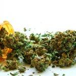 Marihuana Medicinal Le Esta Ahorrando Millones a Los Estados Unidos