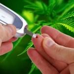 Cannabis: una opción de tratamiento potencial para la resistencia a la insulina y la diabetes relacionada con la obesidad