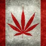 Cárteles  de la droga en Canadá están menos involucrados en el cannabis