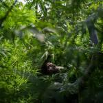 Pigmeos del Congo trafican cannabis para sobrevivir