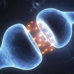 9 hechos sobre el sistema endocannabinoide