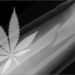 Estudio israelí menciona que el cannabis ayuda a curar las fracturas de huesos