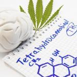 Dosis diaria de cannabis puede proteger el cerebro de los efectos del envejecimiento