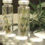 Paraguay: Farmacéutica comenzará a producir aceite de cannabis a finales de este año