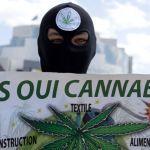 Francia reduce el castigo por consumo de cannabis