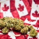 Senado canadiense podría retardar la legalización de la marihuana