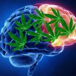 El CBD puede tratar los síntomas psiquiátricos y cognitivos asociados a la neurodegeneración