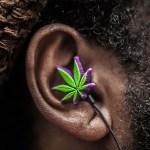 Música y marihuana – La neurociencia de la escucha