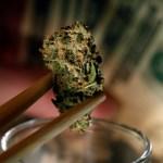 Empresarios estudian en Nueva York cómo incursionar en el negocio del cannabis
