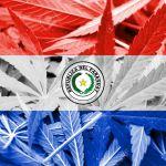 Paraguay no está listo, pero hay que legalizar el cannabis, dice experto
