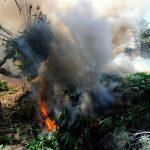 Ejército colombiano causó inhalación masiva de marihuana tras quemar más de 800 kilos