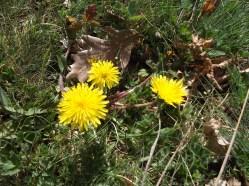 Пролет в Шарлия 3