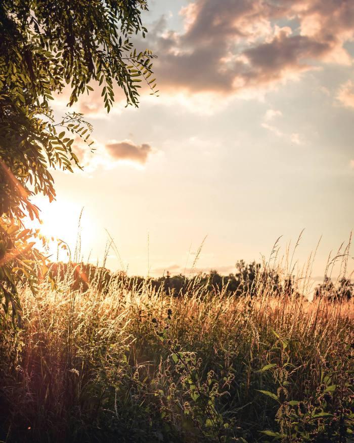 Goldene Stunde in der Feldflur