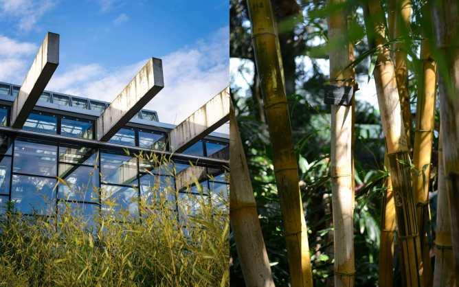 Von außen ist die Hallo mit bambus bepflanzt. Diesen findet man aber auch im Inneren der Biosphäre in Potsdam.