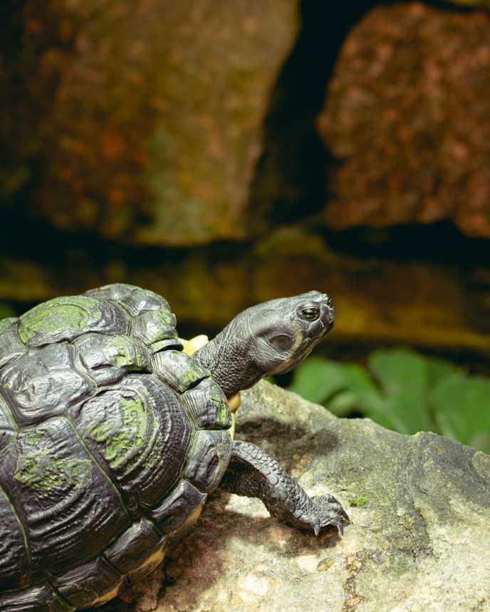Schildkröte im Botanischen Garten Potsdam