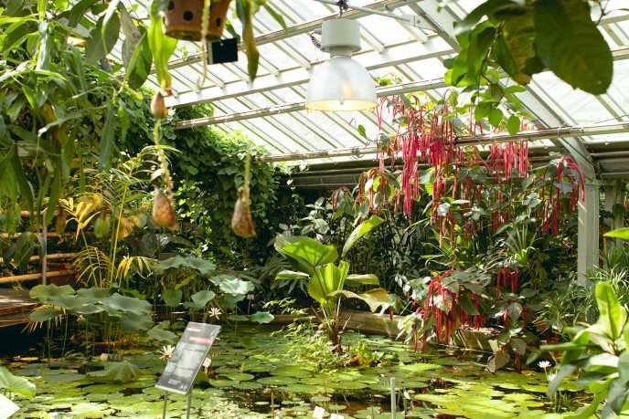 Seerosenteich mit Wasser- und Hängepflanzen