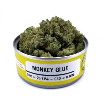 Space Monkey Meds Monkey Glue