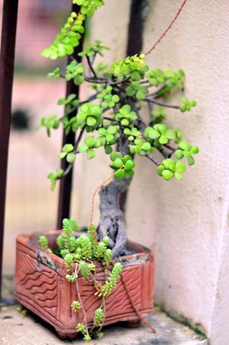 leaves_5