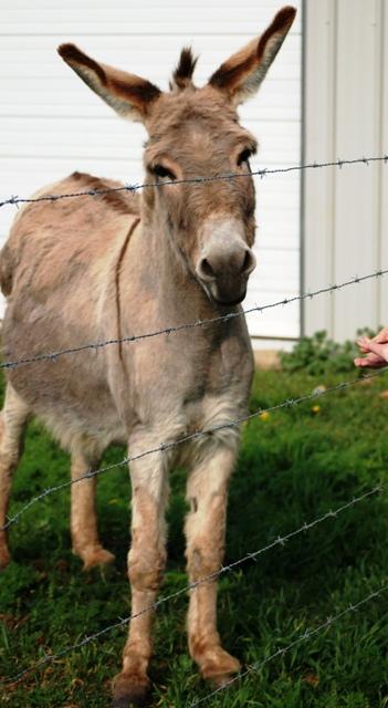 Mom's Donkey