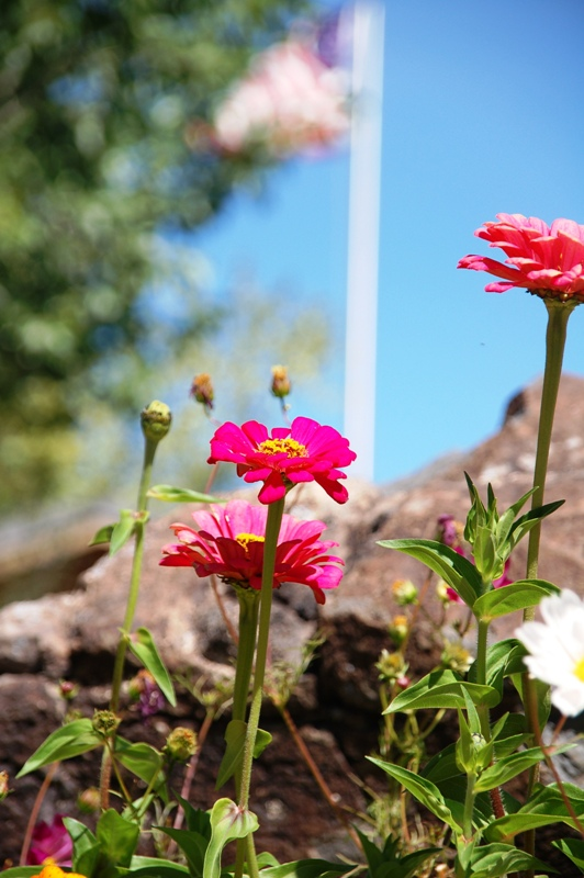 This flowerbed with zinnias was right inside the entrance. I liked the picture having the flag in the background.
