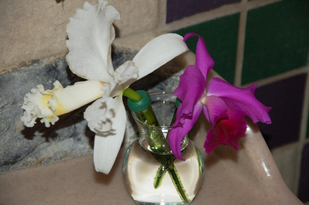 Fresh orchids are placed at each sink weekly.