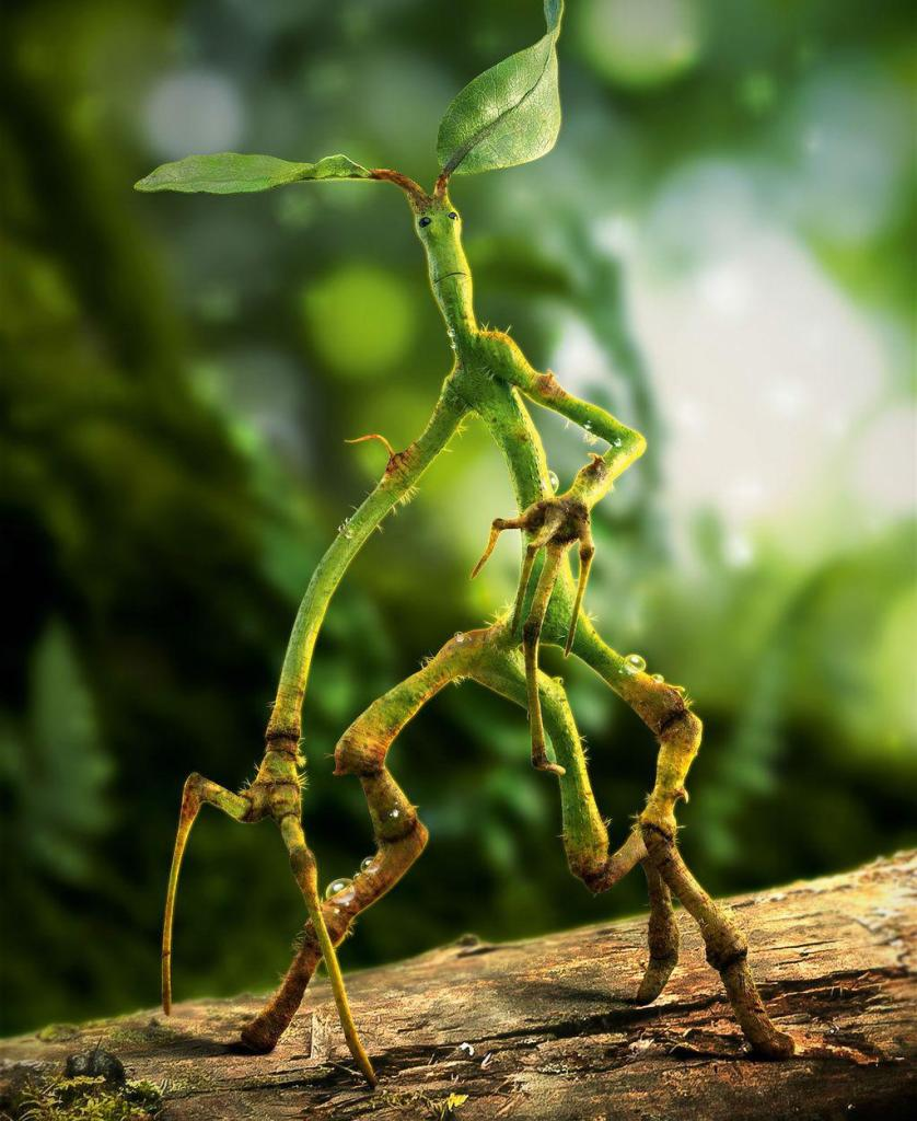 Obrázek kůroleza. Kůrolez stojí všemi třemi svými nožičkami na nějaké dřevině. Na několika místech má na nohou kapky tekutiny, zřejmě rosy. Zelené tělíčko je lehce prohnuté vpřed, ruce má před sebou v póze, jako by hrabal. Jasně zřetelný obličej se kouká kamsi vzhůru. Z hlavy mu vyrůstají dva listy. V pozadí je vidět blíže neurčená zeleň.