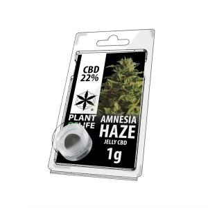 Plant of Life - CBD Hasch - Amnesia Haze