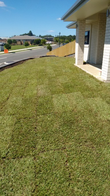 Carpet Grass layed at Mullumbimby