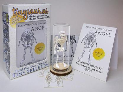 Angel All-in-one miniature skeleton model kit with packaging