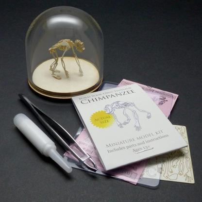 Chimpanzee All-in-one miniature skeleton model kit with laser-cut bones, glass display dome, instructions, tweezers, glue, and a magnifier by Tinysaur.us