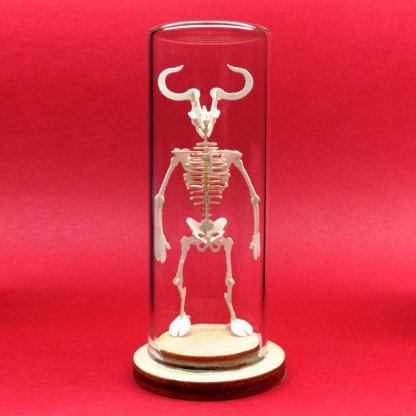 Minotaur miniature skeleton model in glass display dome by Tinysaur.us