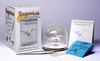 Pterodactyl all-in-one miniature skeleton model kit with laser-cut bones, glass display dome, instructions, tweezers, glue, a magnifier, and packaging by Tinysaur.us
