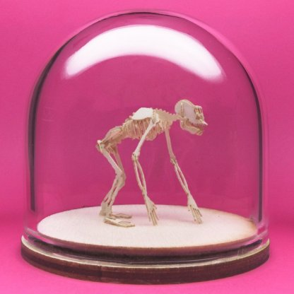Chimpanzee All-in-one miniature skeleton model kit in hand-blown glass display dome by Tinysaur.us
