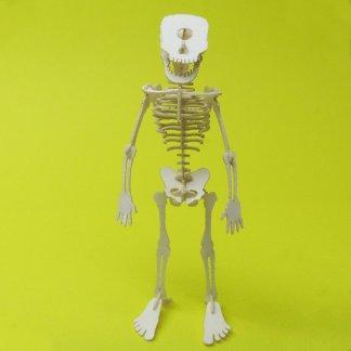 Assembled Cyclops miniature skeleton model by Tinysaur.us