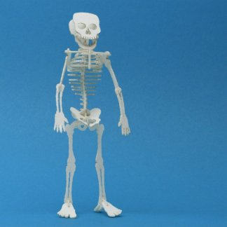Assembled Tiny Human miniature skeleton model by Tinysaur.us
