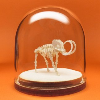 Woolly Tiny miniature skeleton model in hand-blown glass display dome by Tinysaur.us